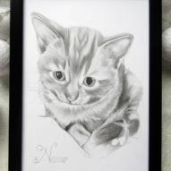 portret pisica cadou